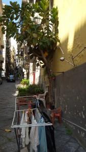 Tendederos urbanos
