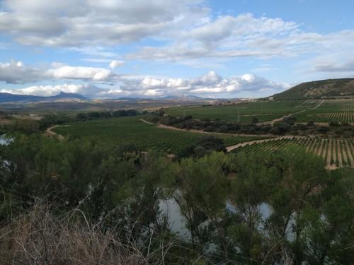 Tapiz de viñedos alfombrando las lomas riojanas